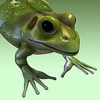 http://www.pixologic01.com/zbrush/gallery/files/0605freshdb/frog_v04lores.jpg