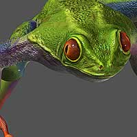 http://www.pixologic01.com/zbrush/gallery/files/0611chammer/frog_b.jpg
