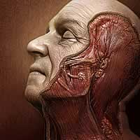 http://www.pixologic01.com/zbrush/gallery/files/0701PSTCHOART/face-new.jpg