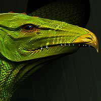 http://www.pixologic01.com/zbrush/gallery/files/0802sparty/serpent_close.jpg