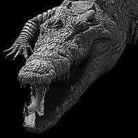 http://www.pixologic01.com/zbrush/gallery/files/0804Arohey/croc1.jpg