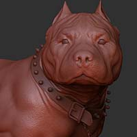 http://www.pixologic01.com/zbrush/gallery/files/0808alancamara/dog1.jpg