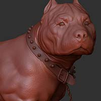 http://www.pixologic01.com/zbrush/gallery/files/0808alancamara/dog3.jpg